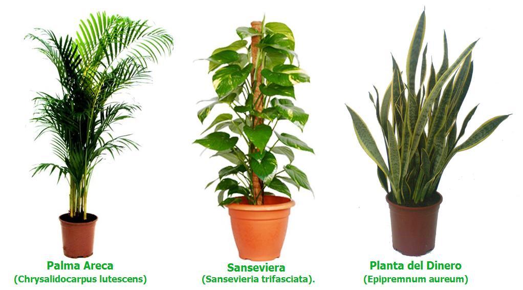 Consejos para el cuidado de las #plantas