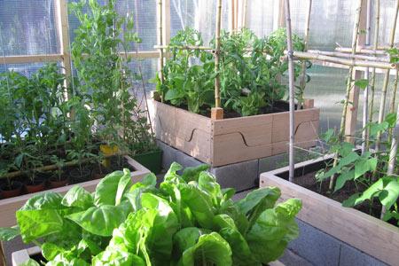 Construcci n paso a paso de un invernadero para tu jardin for Construccion de viveros e invernaderos
